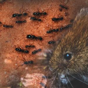 Ochrona przed owadami i gryzoniami